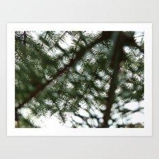 Sun Pines Art Print