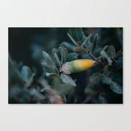 Desert Plants v.2 Canvas Print