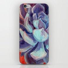 Succulent Echeveria Cactus, Scarlet Turquoise Purple iPhone Skin