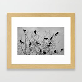 Murder Of Crows - Five Framed Art Print
