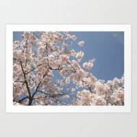 cherry blossoms Art Prints featuring  Cherry Blossoms  by cescabear