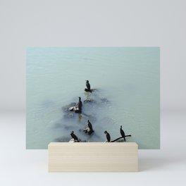 Cormorants Birds on the River Mini Art Print
