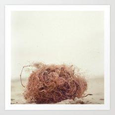 wool at beach Art Print