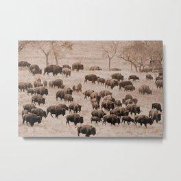 Buffalo Herd in Sepia Metal Print