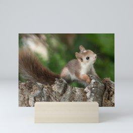 bébé écureuil  Mini Art Print