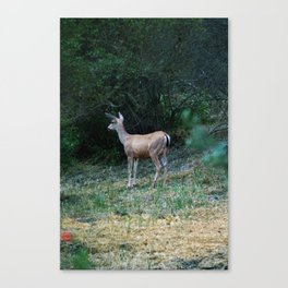 The Forest Fringe Canvas Print