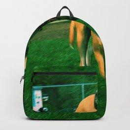 Dog Laps Backpack