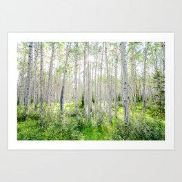 Poplar Grove Art Print