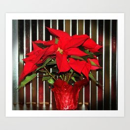 Christmas Red Poinsettia Art Print