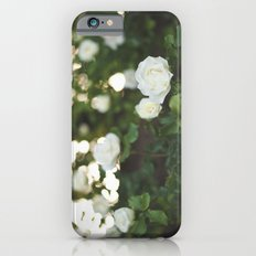 White Roses Slim Case iPhone 6s