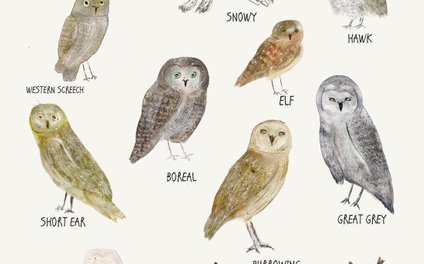 Art Print - owls - bri.buckley