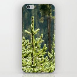 Young Lodgepole Pines after a rain iPhone Skin