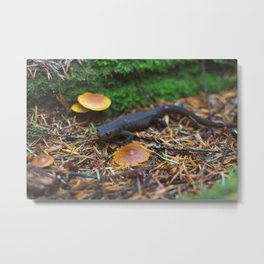 Rough Skinned Newt Metal Print