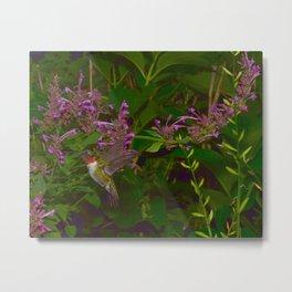 Male ruby-throated hummingbird and agastache 45 Metal Print