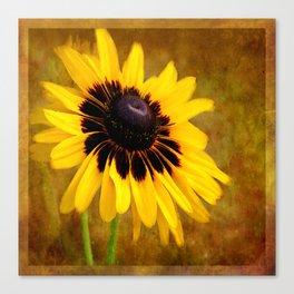 Gloriosa Daisy Canvas Print