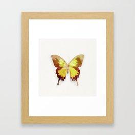 Tropical Butterfly Framed Art Print