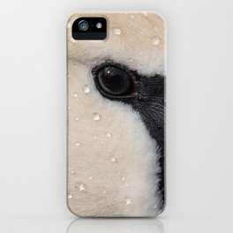 Mute Swan in Winter - CloseUp iPhone Case