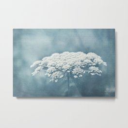 AFE Queen Anne's Lace Metal Print