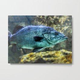 fish-underwater-world Metal Print