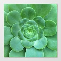 succulent Canvas Prints featuring Succulent  by Laura Ruth