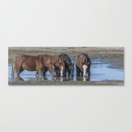 Mustangs Sharing What's Left of the Water Canvas Print
