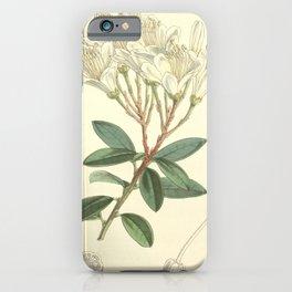 Flower 4981 befaria mathewsii Mr Mathews s Befaria1 iPhone Case