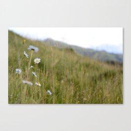 the untouched plains Canvas Print