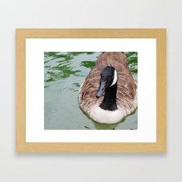 Beauty Shot of a Canada Goose--Animal Photography Prints Framed Art Print