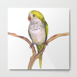 Quaker parrot in watercolor Metal Print