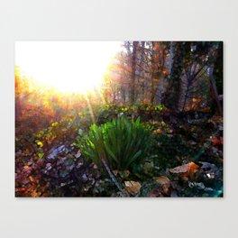 'Sun Awakening Sleeping Daffodils' Canvas Print