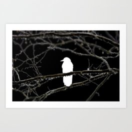 Winter is Crowing Art Print