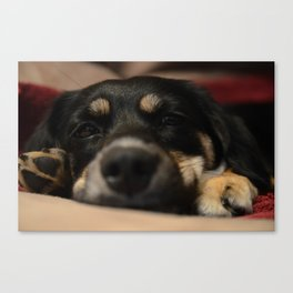 Tuckered Out Tipper Canvas Print
