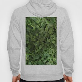 Leafs of Green (Color) Hoody