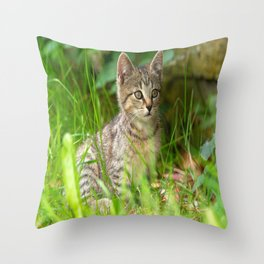 Beautiful Baby cat in the Grass Throw Pillow