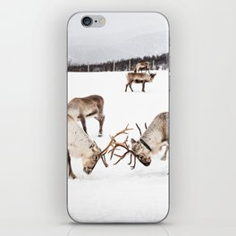 Playing Reindeers In Snow In Tromsø | North Of Norway Photo | Travel Photography Art Print iPhone Skin