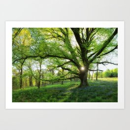 To Swing On The Tree Of Hope Art Print