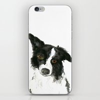 border collie iPhone & iPod Skins featuring Border Collie by Naomi Bardoff