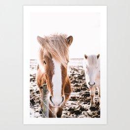 Iceland horses Art Print