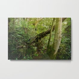 Enchanted Forest - Study III Metal Print