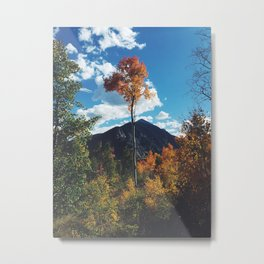 Fall Change Metal Print