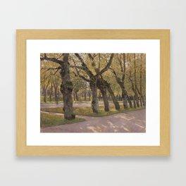 Autumn lime-trees. Pavlovsk. Framed Art Print