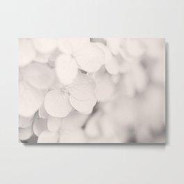 White Hydrangea Metal Print