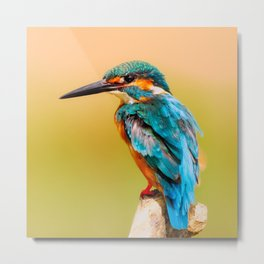 Radiant Bird Metal Print
