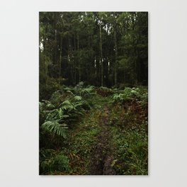 Into the Woods Canvas Print