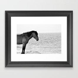 Assateague Pony Framed Art Print