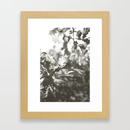 Summer III Framed Art Print