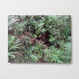 Redwood Rainforest Ferns Metal Print