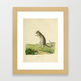 """A Poto Roo"" by Sarah Stone, 1790 Framed Art Print"
