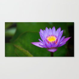 water lily 2x1 Canvas Print