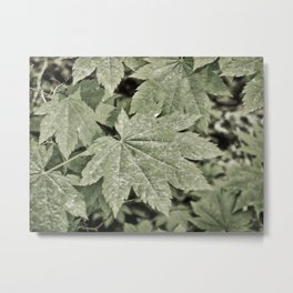 Leaves on the Misty Mountain Top. Metal Print